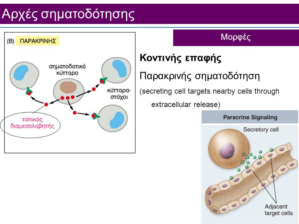 Aρχές σηματοδότησης Κοντινής επαφής Παρακρινής σηματοδότηση (secreting cell targets nearby cells through extracellular release) Μορφές