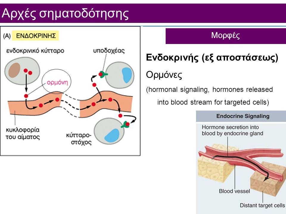 Aρχές σηματοδότησης Ενδοκρινής (εξ αποστάσεως) Ορμόνες (hormonal signaling, hormones released into blood stream for targeted cells) Μορφές