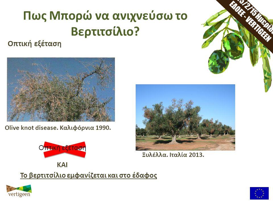 25/2/15 Ημερίδα ΕΔΟΕΕ - VERTIGEEN Πως Μπορώ να ανιχνεύσω το Βερτιτσίλιο? Οπτική εξέταση Olive knot disease. Καλιφόρνια 1990. Ξυλέλλα. Ιταλία 2013. Το