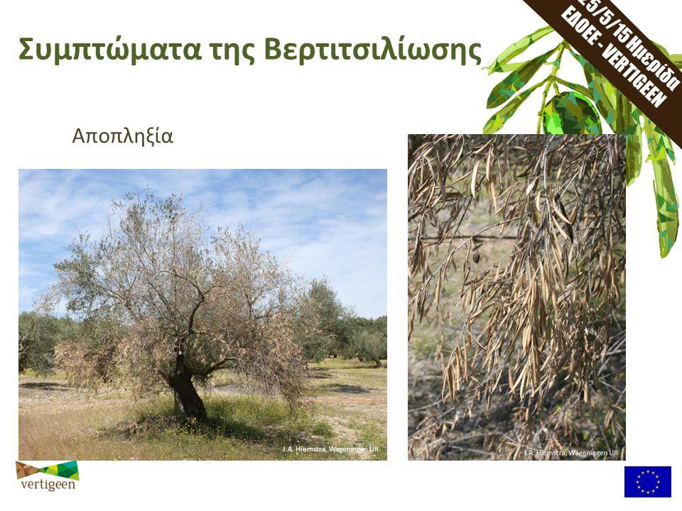 25/2/15 Ημερίδα ΕΔΟΕΕ - VERTIGEEN Πρωτόκολλο δειγματοληψίας Το αναμεμειγμένο δείγμα χώματος μπορεί τώρα να χρησιμοποιηθεί στο επόμενο βήμα Πρωτόκολλο προετοιμασίας Δείγματος 20m Επιλέξτε 25 δέντρα μέσα σε ένα εκτάριο, σε σχέδιο πλέγματος, περίπου 20 μέτρα μακρία το ένα απο το άλλο.