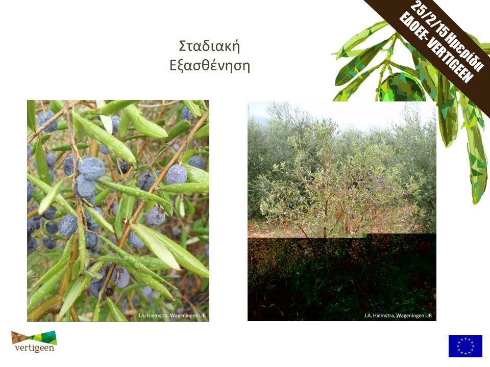 25/2/15 Ημερίδα ΕΔΟΕΕ - VERTIGEEN Το Βερτιτσίλιο δεν κατανέμεται ομοιόμορφα ούτε στα φυτά.