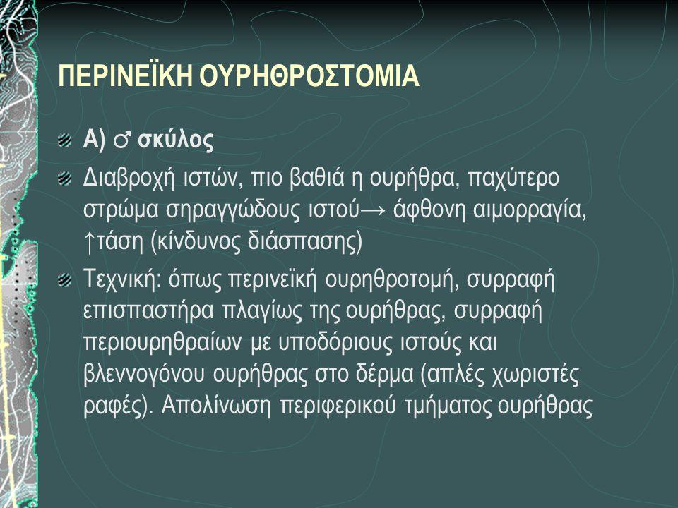 ΠΕΡΙΝΕΪΚΗ ΟΥΡΗΘΡΟΣΤΟΜΙΑ Α) ♂ σκύλος Διαβροχή ιστών, πιο βαθιά η ουρήθρα, παχύτερο στρώμα σηραγγώδους ιστού→ άφθονη αιμορραγία, ↑τάση (κίνδυνος διάσπασης) Τεχνική: όπως περινεϊκή ουρηθροτομή, συρραφή επισπαστήρα πλαγίως της ουρήθρας, συρραφή περιουρηθραίων με υποδόριους ιστούς και βλεννογόνου ουρήθρας στο δέρμα (απλές χωριστές ραφές).