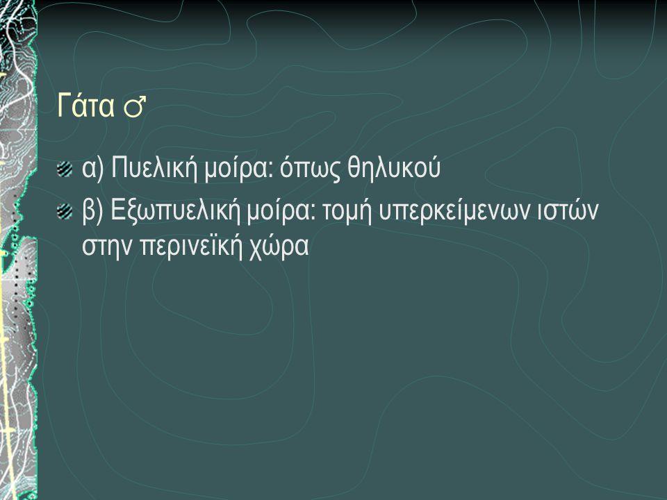 ΟΥΡΗΘΡΟΤΟΜΗ