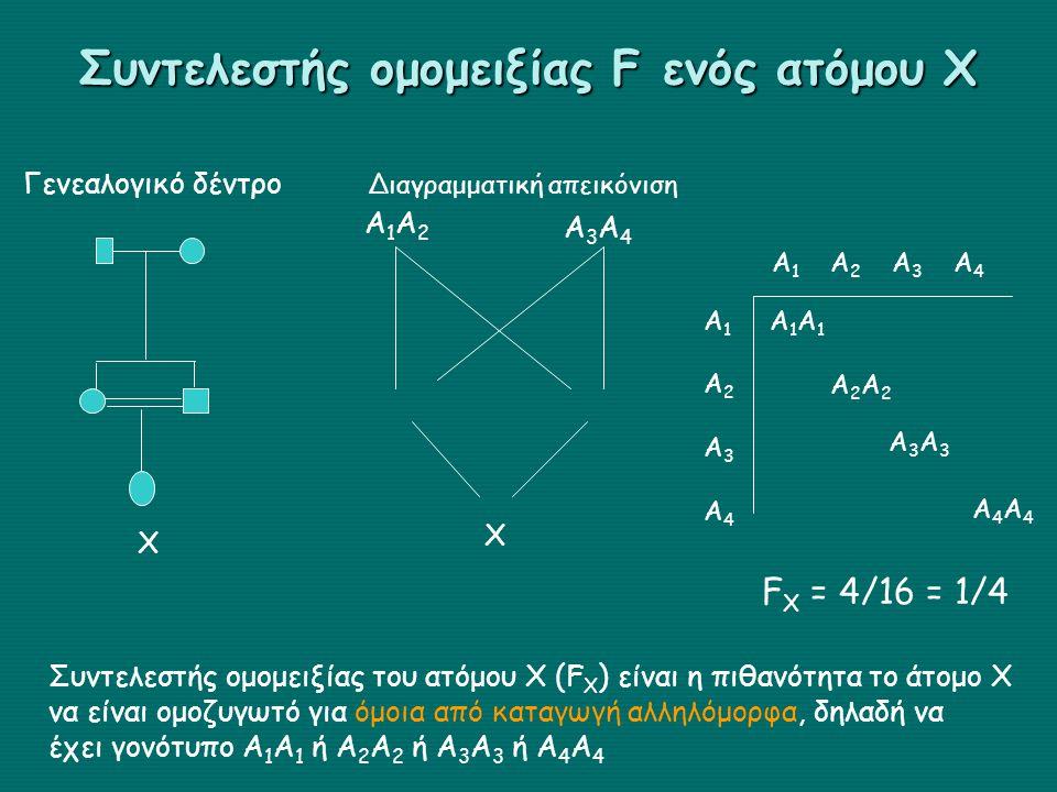 Συντελεστής ομομειξίας F ενός ατόμου Χ X Γενεαλογικό δέντρο Διαγραμματική απεικόνιση Χ Α1Α2Α1Α2 Α3Α4Α3Α4 Συντελεστής ομομειξίας του ατόμου Χ (F X ) είναι η πιθανότητα το άτομο Χ να είναι ομοζυγωτό για όμοια από καταγωγή αλληλόμορφα, δηλαδή να έχει γονότυπο Α 1 Α 1 ή Α 2 Α 2 ή Α 3 Α 3 ή Α 4 Α 4 Α1Α2Α3Α4Α1Α2Α3Α4 Α 1 Α 2 Α 3 Α 4 Α1Α1Α1Α1 Α2Α2Α2Α2 Α3Α3Α3Α3 Α4Α4Α4Α4 F X = 4/16 = 1/4