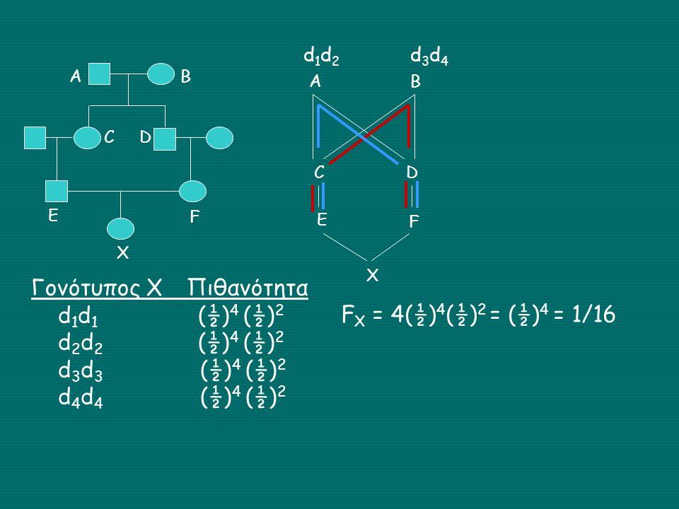ΑΒ C D E F X AB CD E F X d1d2d1d2 d3d4d3d4 Γονότυπος Χ Πιθανότητα d 1 d 1 (½) 4 (½) 2 d 2 d 2 (½) 4 (½) 2 d 3 d 3 (½) 4 (½) 2 d 4 d 4 (½) 4 (½) 2 F X = 4(½) 4 (½) 2 = (½) 4 = 1/16