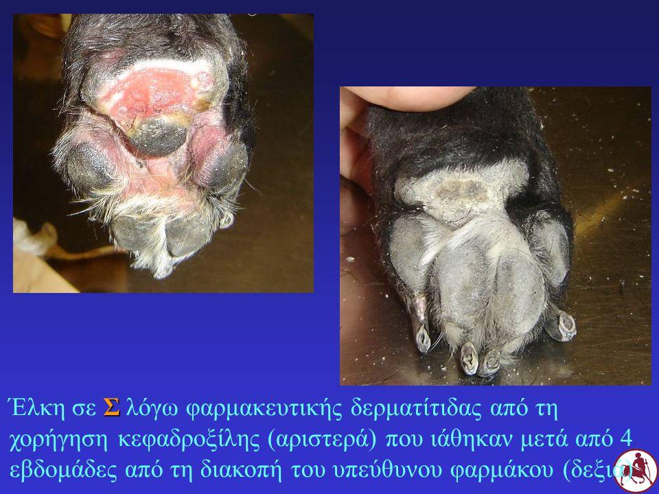 Σ Έλκη σε Σ λόγω φαρμακευτικής δερματίτιδας από τη χορήγηση κεφαδροξίλης (αριστερά) που ιάθηκαν μετά από 4 εβδομάδες από τη διακοπή του υπεύθυνου φαρμ