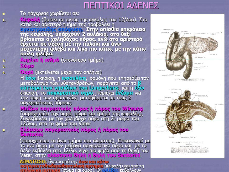 ΠΕΠΤΙΚΟΙ ΑΔΕΝΕΣ Το πάγκρεας χωρίζεται σε: Το πάγκρεας χωρίζεται σε: 1. Κεφαλή (βρίσκεται εντός της αγκύλης του 12/λου). Στο κάτω και αριστερό τμήμα τη