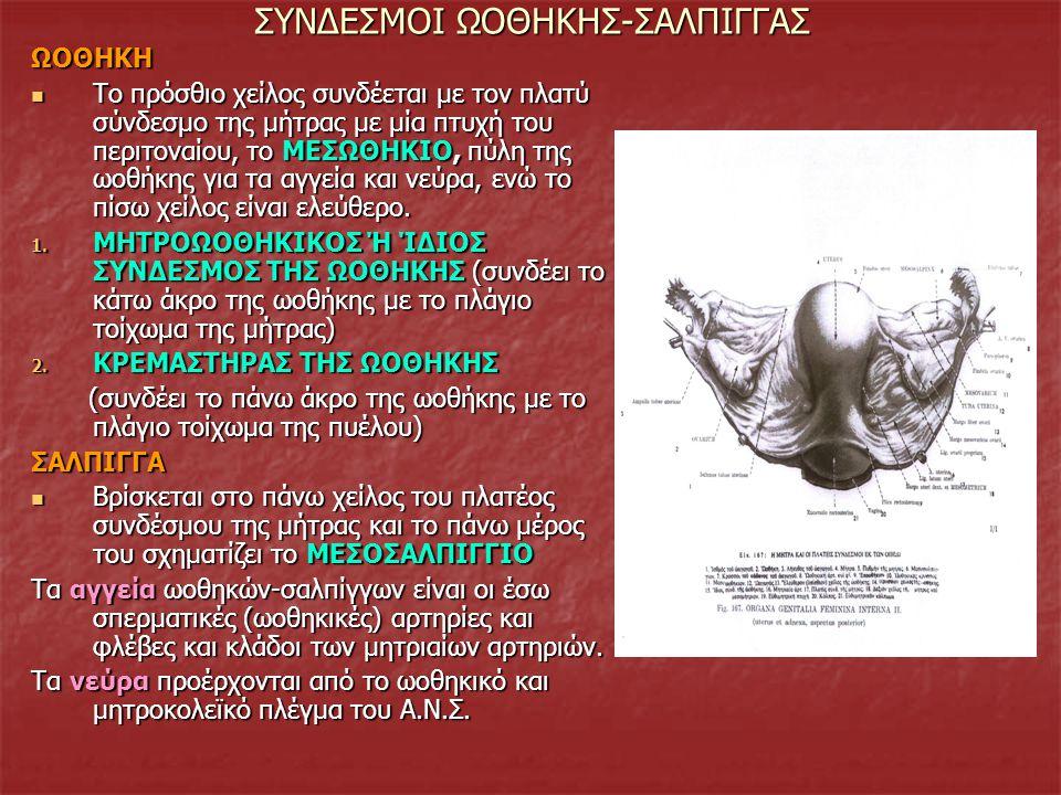ΣΥΝΔΕΣΜΟΙ ΩΟΘΗΚΗΣ-ΣΑΛΠΙΓΓΑΣ ΩΟΘΗΚΗ Το πρόσθιο χείλος συνδέεται με τον πλατύ σύνδεσμο της μήτρας με μία πτυχή του περιτοναίου, το ΜΕΣΩΘΗΚΙΟ, πύλη της ω