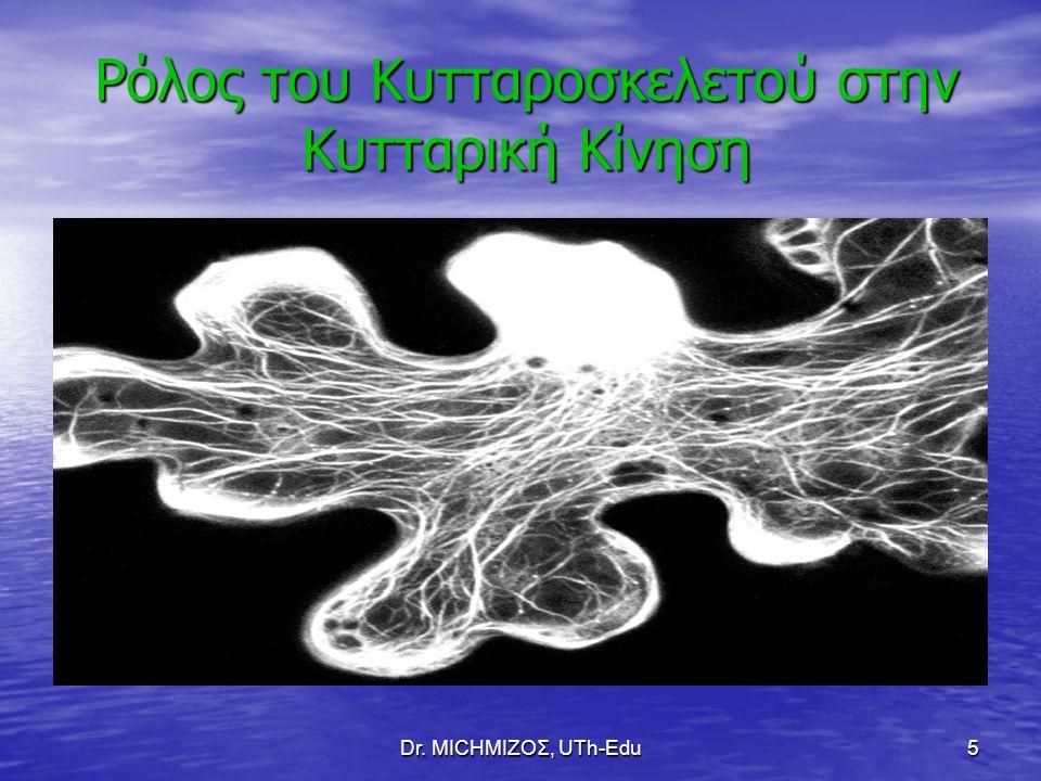 Dr. ΜΙCHΜΙΖΟΣ, UTh-Edu6 Ρόλος του Κυτταροσκελετού στην Σταθεροποίηση των Κυτ. Οργανιδίων