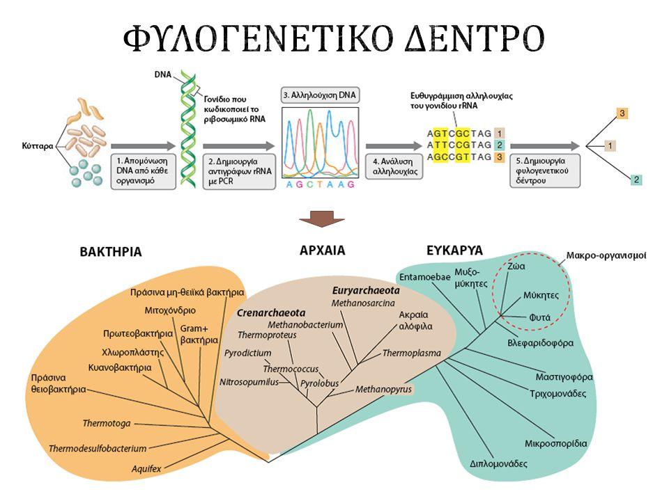 Στο βυθό λίμνης ( Πράσινα και ιώδη φωτότροφα βακτήρια ) Βακτηριακές κοινωνίες Στην ανθρώπινη γλώσσα ΣυνθήκεςΠεριγραφή Γένος / είδος ΕπικράτειαΕνδιαίτημα ΕλάχιστηΒέλτιστηΜέγιστη Θερμοκρασίας ΥψηλήΥπερθερμόφιλο Methanopyrus kandleriArchaea Υποθαλάσσιες υδροθερμικές πηγές 90°C106°C122°C ΧαμηλήςΨυχρόφιλο Psychromonas ingrahamiiBacteria Θαλάσσιος πάγος -12°C5°C5°C10°C pH ΧαμηλόΟξινόφιλο Picrophilus oshimaeArchaea Όξινες θερμές πηγές -0.060.74 ΥψηλόΑλκαλόφιλο Natronobacterium gregoryiArchaea Πηγές με ανθρακικό νάτριο 8.51012 Πίεσης (atm) Βαρόφιλο Moritella yayanosiiBacteria Πυθμένας ωκεανών 500700>1000 Αλατότητας (NaCl) Αλόφιλο Halobacterium salinarumArchaea Αλατωρυχεία 15%25%32% Παραδείγματα ακραιόφιλων
