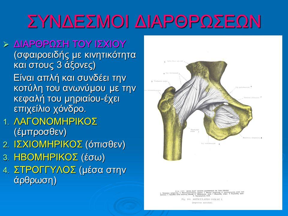 ΣΥΝΔΕΣΜΟΙ ΔΙΑΡΘΡΩΣΕΩΝ  ΔΙΑΡΘΡΩΣΗ ΤΟΥ ΙΣΧΙΟΥ (σφαιροειδής με κινητικότητα και στους 3 άξονες) Είναι απλή και συνδέει την κοτύλη του ανωνύμου με την κεφαλή του μηριαίου-έχει επιχείλιο χόνδρο.