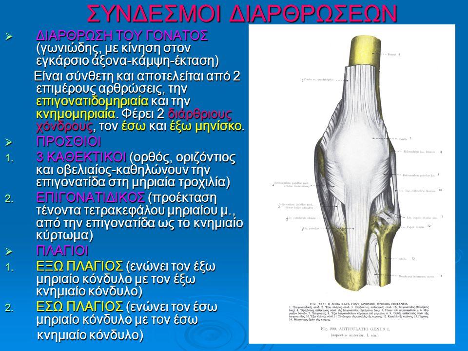 ΣΥΝΔΕΣΜΟΙ ΔΙΑΡΘΡΩΣΕΩΝ  ΔΙΑΡΘΡΩΣΗ ΤΟΥ ΓΟΝΑΤΟΣ (γωνιώδης, με κίνηση στον εγκάρσιο άξονα-κάμψη-έκταση) Είναι σύνθετη και αποτελείται από 2 επιμέρους αρθρώσεις, την επιγονατιδομηριαία και την κνημομηριαία.
