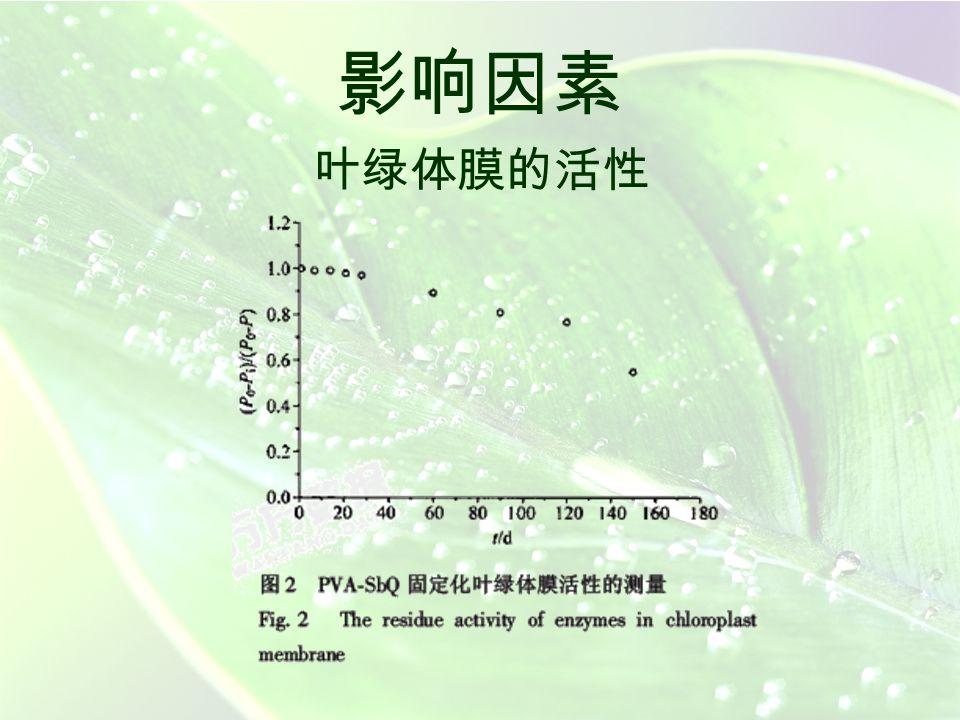 影响因素 叶绿体膜的活性 根据测得的 PVA-SbQ 固定化叶绿体膜催化降解过 氧化氢产生氧气的速率来计算膜的活性。本实验采用敌 草隆作为样品(以下实验除指明外,均采用敌草隆), 结果如图 2 。由图 2 可见,保存在 -20 o C 冰箱中的 PVA- SbQ 固定膜 1 个月内活性基本没有改变; 5 个月后,膜活 性保留仍超过 50 %,满足实际测定要求。