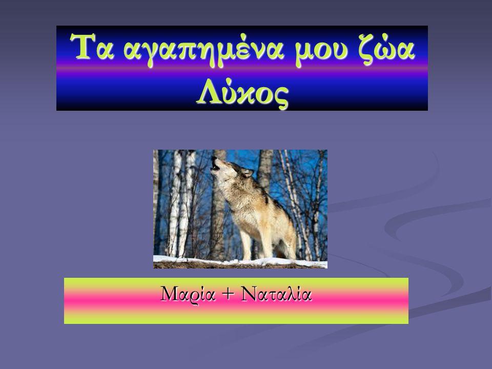 Μαρία + Ναταλία Τα αγαπημένα μου ζώα Λύκος