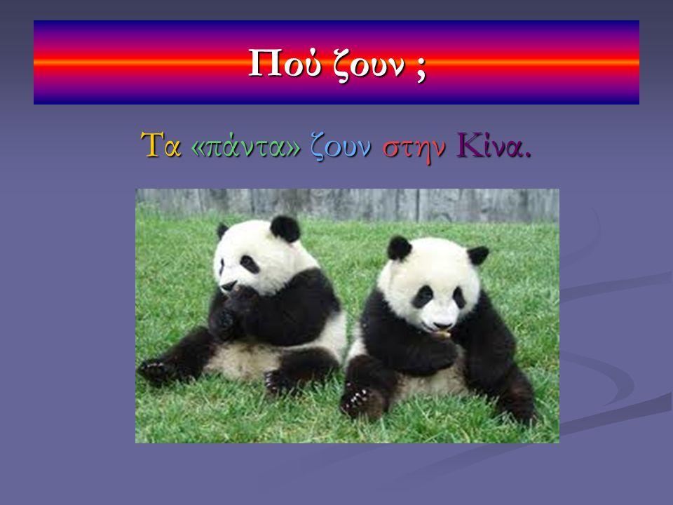 Πού ζουν ; Τα «πάντα» ζουν στην Κίνα.