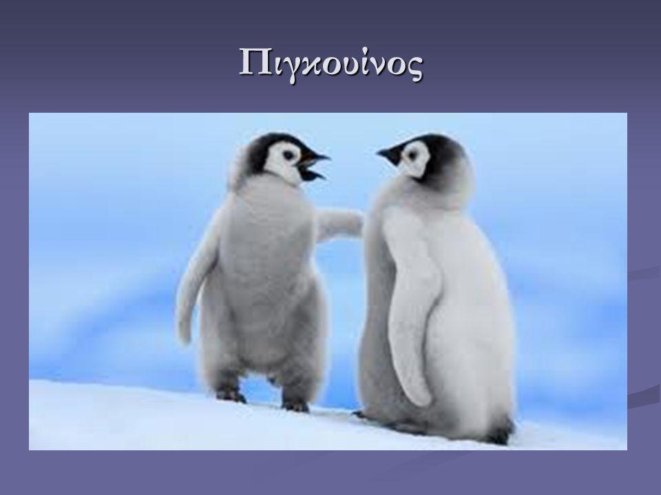 Πού ζουν; Οι πιγκουίνοι ζουν στο νότιο ημισφαίριο, Οι πιγκουίνοι ζουν στο νότιο ημισφαίριο, δηλαδή, στην Ανταρκτική.
