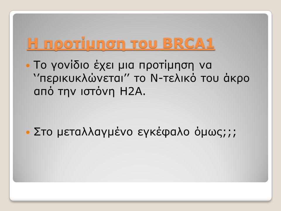 Η προτίμηση του BRCA1 Το γονίδιο έχει μια προτίμηση να ''περικυκλώνεται'' το Ν-τελικό του άκρο από την ιστόνη Η2Α. Στο μεταλλαγμένο εγκέφαλο όμως;;;