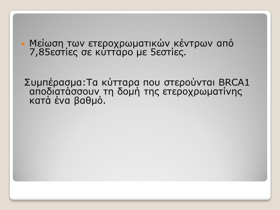 Μείωση των ετεροχρωματικών κέντρων από 7,85εστίες σε κύτταρο με 5εστίες. Συμπέρασμα:Τα κύτταρα που στερούνται BRCA1 αποδιατάσσουν τη δομή της ετεροχρω