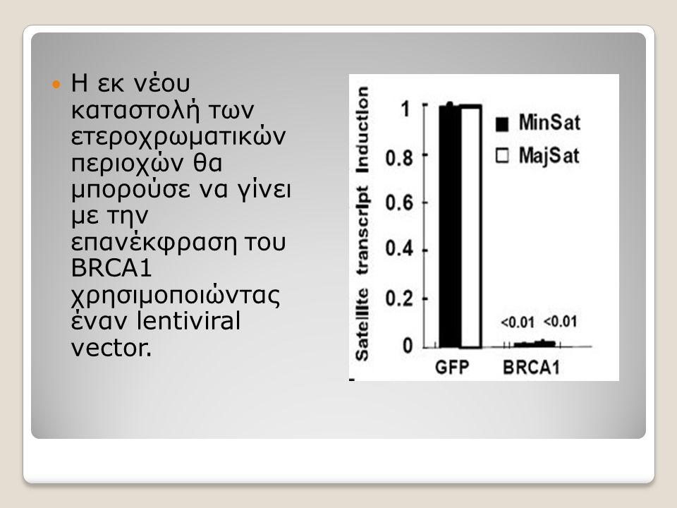Η εκ νέου καταστολή των ετεροχρωματικών περιοχών θα μπορούσε να γίνει με την επανέκφραση του BRCA1 χρησιμοποιώντας έναν lentiviral vector.