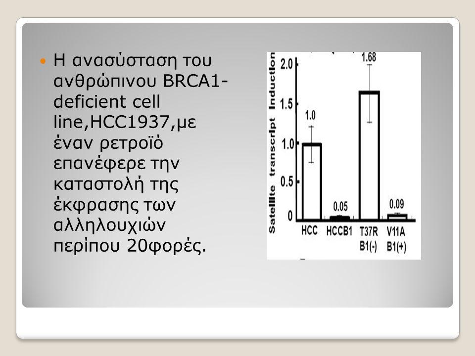 Η ανασύσταση του ανθρώπινου BRCA1- deficient cell line,HCC1937,με έναν ρετροϊό επανέφερε την καταστολή της έκφρασης των αλληλουχιών περίπου 20φορές.