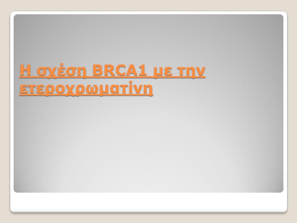 Η σχέση ΒRCA1 με την ετεροχρωματίνη