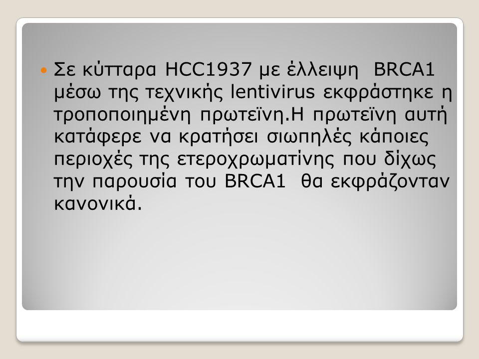 Σε κύτταρα HCC1937 με έλλειψη BRCA1 μέσω της τεχνικής lentivirus εκφράστηκε η τροποποιημένη πρωτεϊνη.Η πρωτεϊνη αυτή κατάφερε να κρατήσει σιωπηλές κάπ