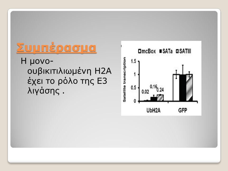 Συμπέρασμα Η μονο- ουβικιτιλιωμένη Η2Α έχει το ρόλο της Ε3 λιγάσης.
