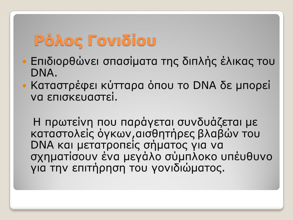Ρόλος Γονιδίου Επιδιορθώνει σπασίματα της διπλής έλικας του DNA. Καταστρέφει κύτταρα όπου το DNA δε μπορεί να επισκευαστεί. Η πρωτείνη που παράγεται σ