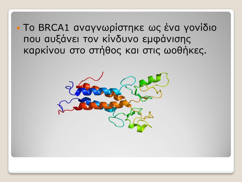 Το BRCA1 αναγνωρίστηκε ως ένα γονίδιο που αυξάνει τον κίνδυνο εμφάνισης καρκίνου στο στήθος και στις ωοθήκες.