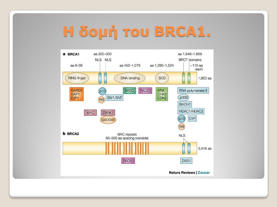 Η δομή του BRCA1.