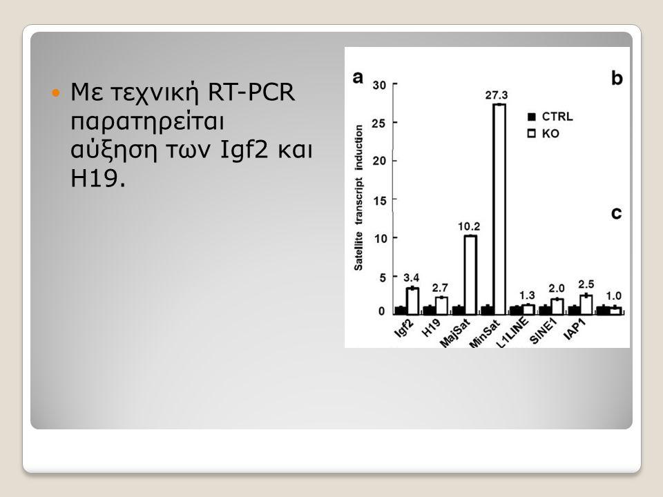 Με τεχνική RT-PCR παρατηρείται αύξηση των Igf2 και H19.