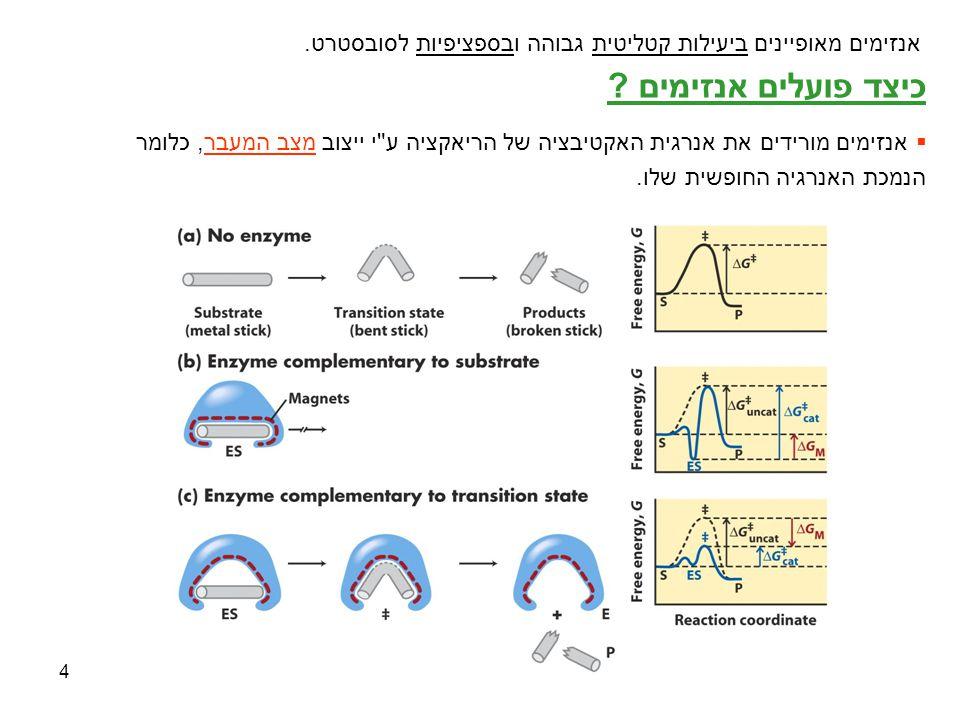 4 כיצד פועלים אנזימים ?  אנזימים מורידים את אנרגית האקטיבציה של הריאקציה ע