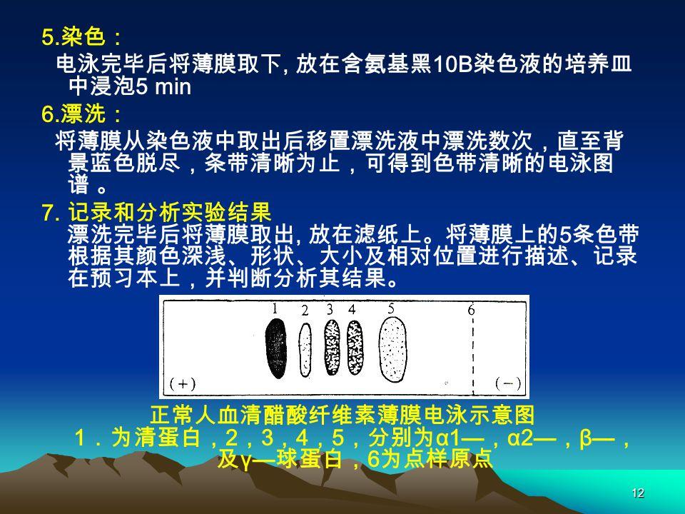 12 5.染色: 电泳完毕后将薄膜取下, 放在含氨基黑 10B 染色液的培养皿 中浸泡 5 min 6.