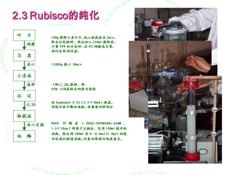 2 、材料与方法 2.1 材料 植物材料 植物材料 扬麦 5 号 2.2 试剂与仪器 高速冷冻离心机 液相层析收集系统 垂直板电泳系统 ……