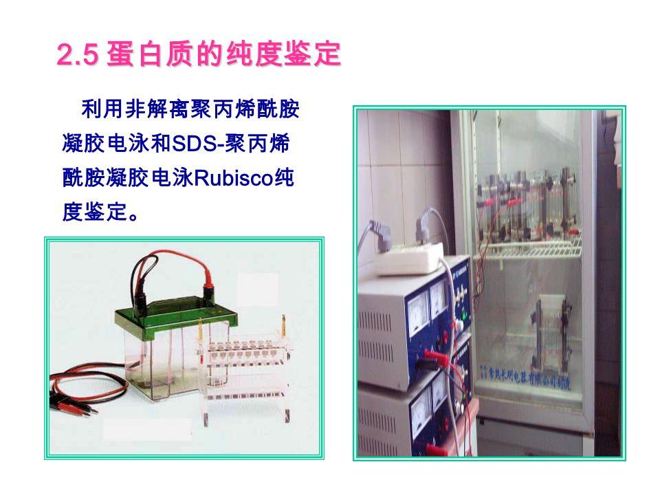 3.2 Rubisco 活化酶的纯化