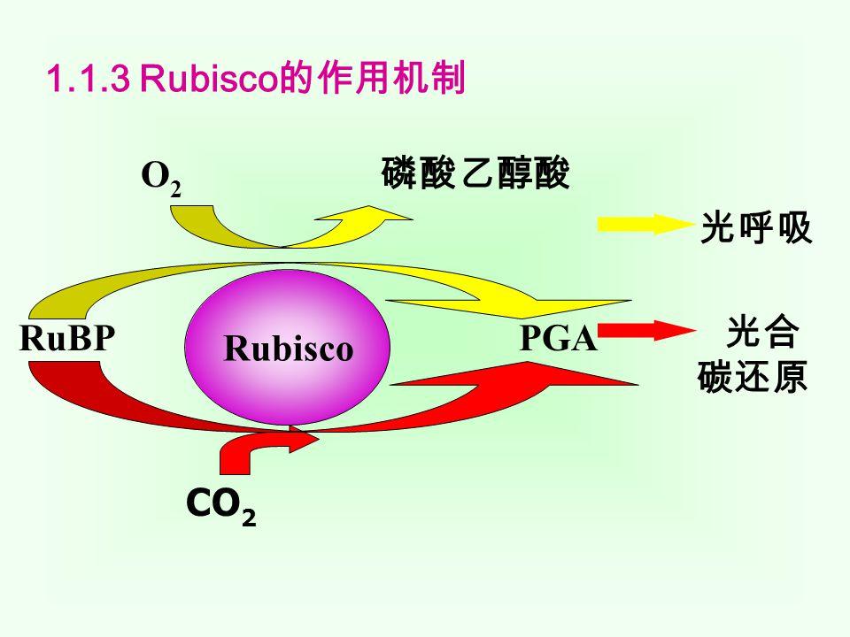 1.1.2 Rubisco 的两种类型  类型 I Rubisco 由 8 个大亚基和 8 个小亚基组成,广泛存在 于所有真核和大多数原核的光合有机体中,大亚基一般由 475 个氨基酸残基组成,不同来源的 Rubisco 大亚基序列之 间有 80% 以上的同源性。大多数 Rubisco 小亚基由 123 个氨 基酸残基组成,不同植物间小亚基氨基酸序列的同源性比大 亚基低得多 [7] ,一般在 70% 左右,然而,小亚基序列中有两 个区域非常保守,即残基 10 ~ 21 和 61 ~ 67 ,暗示这些部分 可能有什么重要功能。  类型Ⅱ Rubisco 仅由 2 个大亚基构成,存在于一种紫色非 硫光合细菌深红红螺菌( Rhodospirillum rubtnm )。虽然 类型Ⅱ Rubisco 不含有小亚基,但它同样像类型 I Rubisco 一 样催化 RuBP 的羧化和氧化两个反应。