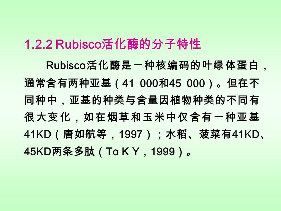 1.2 Rubisco 活化酶的发现、结构及其特性 1.2.1 Rubisco 活化酶的发现 Rubisco 体内外活化机制的矛盾,引起了人们对 Rubisco 活化机理研究的极大兴趣。 1982 年 Somerville 等 发现拟南芥( Arabidopsis thaliana )的突变株( rca )必 须生长在高浓度 CO 2 条件下,虽然它的 Rubisco 与野生型 的相同,但在光下却不能被激活。 Salvucci 等( 1985 ) 进一步研究了 rca 与野生型之间叶绿体蛋白的差异,指出 突变株中丢失了 41 000 与 45 000 两个小肽。实验证明, 光下 Rubisco 的活化依赖于这两个肽段,现在人们把这两 个肽段合称为 Rubisco 活化酶( Rubisco activase )。迄 今,人们已利用免疫测定法(即 Rubisco 活化酶的抗体) 发现在许多高等植物、绿藻、蓝细菌都有 Rubisco 活化酶 的存在( Salvucci 等, 1987 )。