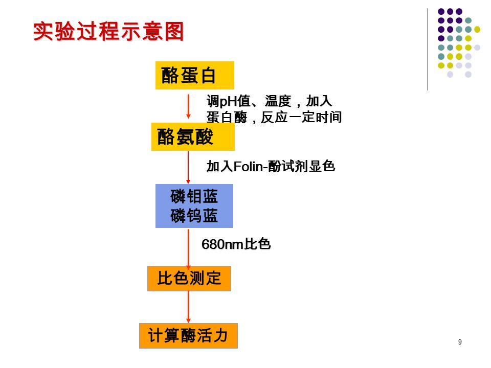 9 实验过程示意图 酪蛋白 调 pH 值、温度,加入 调 pH 值、温度,加入 蛋白酶,反应一定时间 酪氨酸 比色测定 磷钼蓝 磷钨蓝 加入 加入 Folin- 酚试剂显色 680nm 比色 计算酶活力