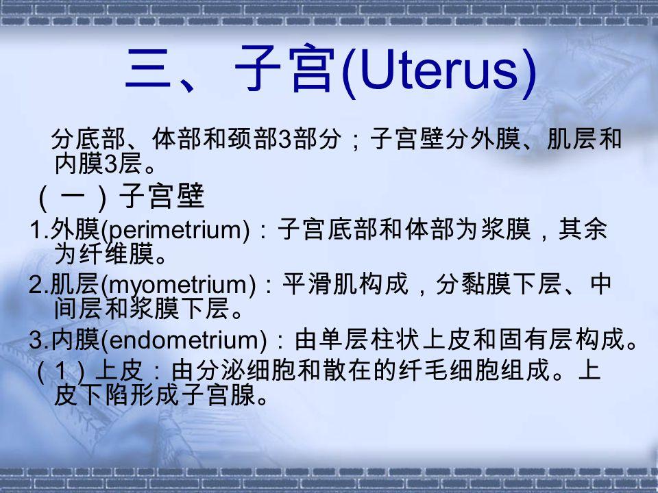 三、子宫 (Uterus) 分底部、体部和颈部 3 部分;子宫壁分外膜、肌层和 内膜 3 层。 (一)子宫壁 1.