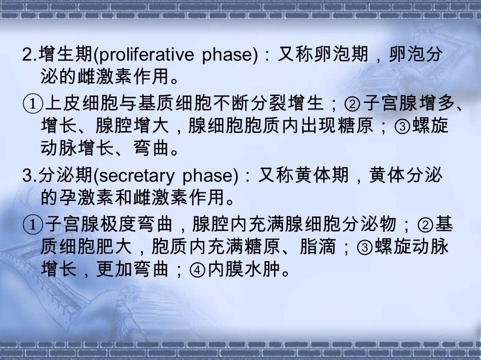 2. 增生期 (proliferative phase) :又称卵泡期,卵泡分 泌的雌激素作用。 ①上皮细胞与基质细胞不断分裂增生;②子宫腺增多、 增长、腺腔增大,腺细胞胞质内出现糖原;③螺旋 动脉增长、弯曲。 3. 分泌期 (secretary phase) :又称黄体期,黄体分泌 的孕激素和雌激