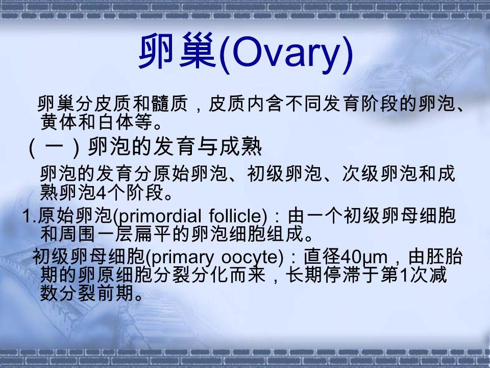 卵巢 (Ovary) 卵巢分皮质和髓质,皮质内含不同发育阶段的卵泡、 黄体和白体等。 (一)卵泡的发育与成熟 卵泡的发育分原始卵泡、初级卵泡、次级卵泡和成 熟卵泡 4 个阶段。 1.