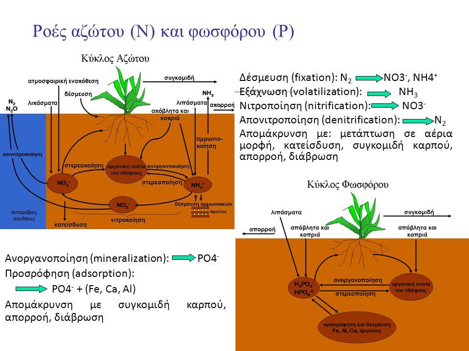 18 Ροές αζώτου (Ν) και φωσφόρου (P) Δέσμευση (fixation): Ν 2 ΝΟ3 -, ΝΗ4 + Εξάχνωση (volatilization): ΝΗ 3 Νιτροποίηση (nitrification): ΝΟ3 - Απονιτροπ