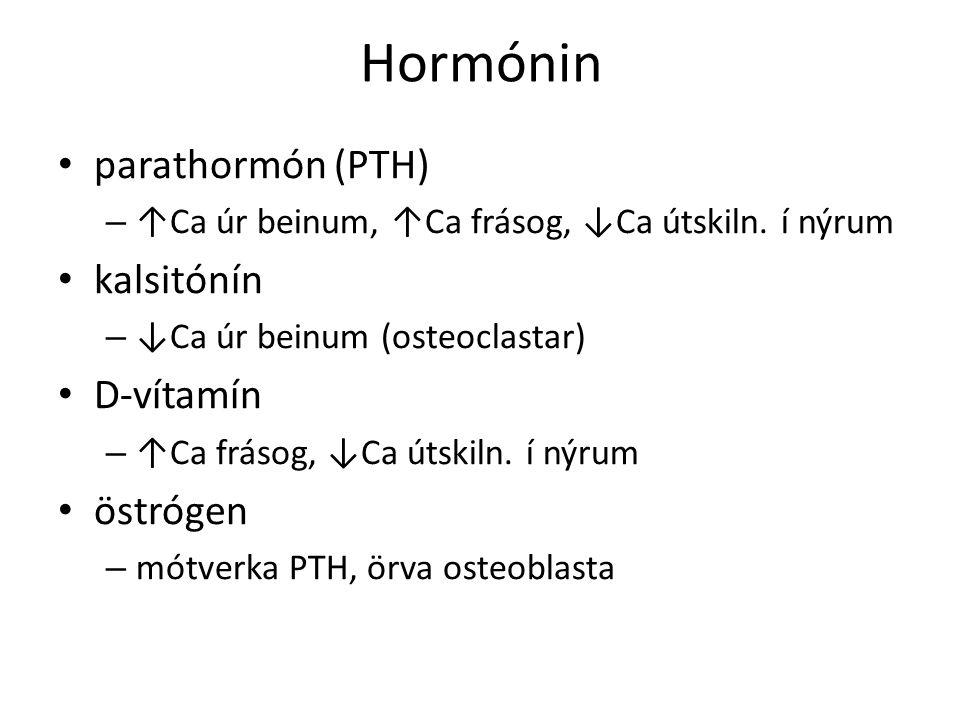 Hormónin parathormón (PTH) – ↑Ca úr beinum, ↑Ca frásog, ↓Ca útskiln.