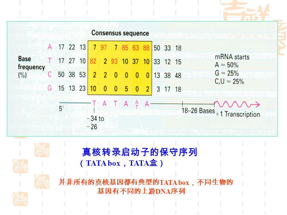 真核转录启动子的保守序列 ( TATA box , TATA 盒) 并非所有的真核基因都有典型的 TATA box ,不同生物的 基因有不同的上游 DNA 序列