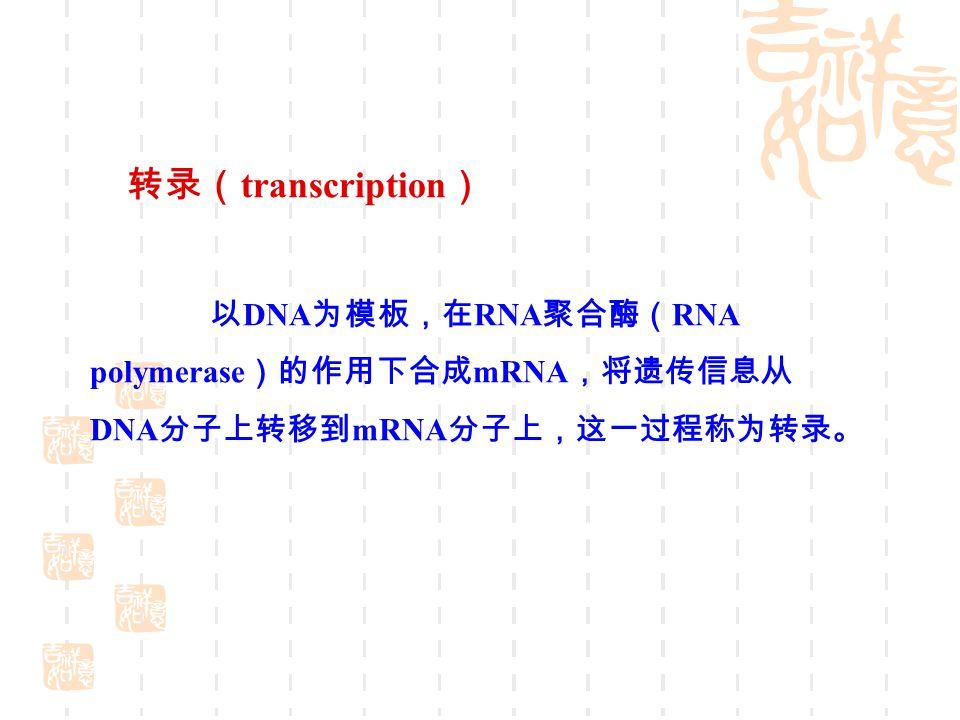 1 转录是基因表达的中心环节 转录是以 DNA 为模板合成 RNA, 并且只是以单股 DNA 为模板, 因此具有不对称性; 用以转录的单链 DNA, 称为模板链, 与复制不同,转录是局部的, 从启动子开始到终止子结束, 为一个转录单位 ; 转录不需要引物; 转录的忠实性相对弱; 转录首先得到 RNA 前体,然后再进行加工转变为成熟的 RNA.
