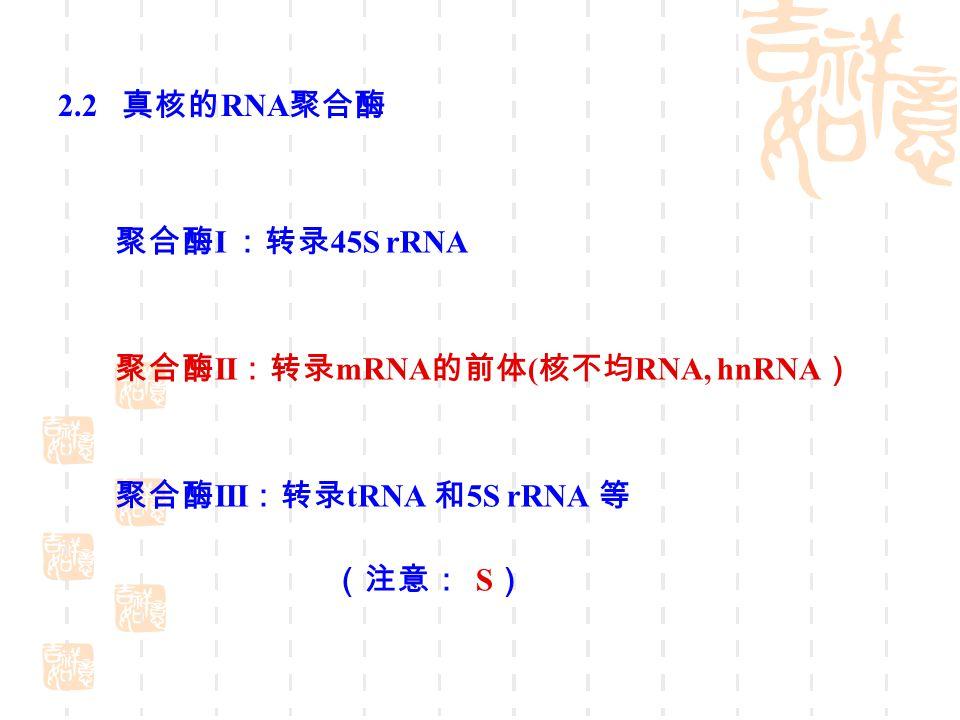 tRNA 转录后的加工与修饰 注意 tRNA 上的修饰和稀有碱基
