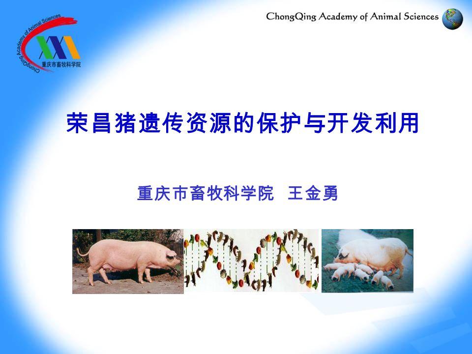 荣昌猪遗传资源的保护与开发利用 重庆市畜牧科学院 王金勇