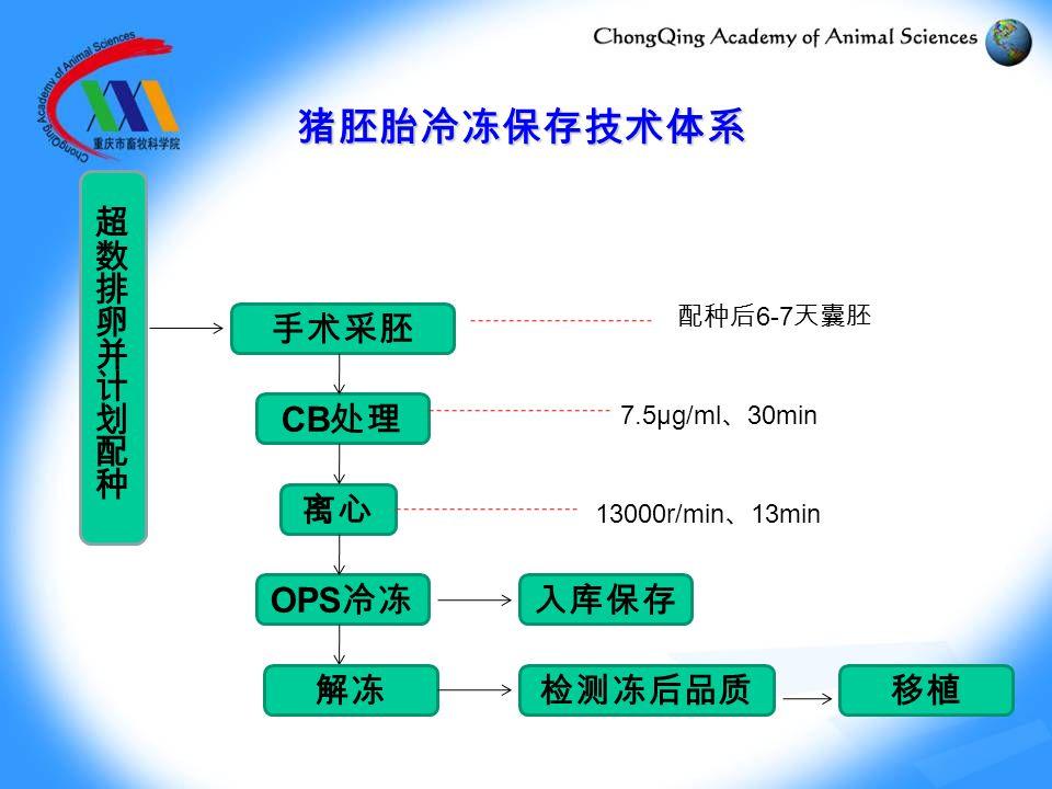猪胚胎冷冻保存技术体系 手术采胚 离心 CB 处理 OPS 冷冻 解冻移植 13000r/min 、 13min 配种后 6-7 天囊胚 7.5μg/ml 、 30min 入库保存 检测冻后品质