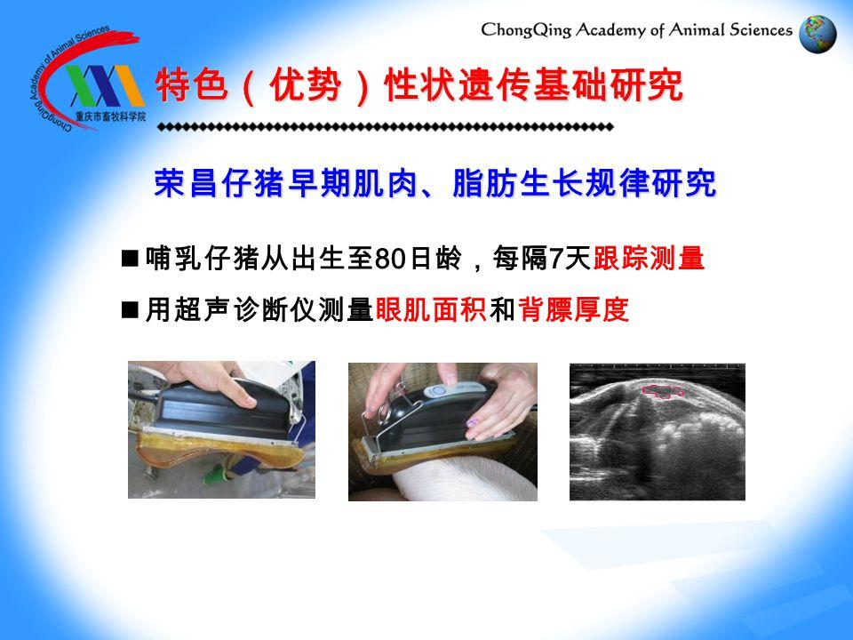 特色(优势)性状遗传基础研究 荣昌仔猪早期肌肉、脂肪生长规律研究 哺乳仔猪从出生至 80 日龄,每隔 7 天跟踪测量 用超声诊断仪测量眼肌面积和背膘厚度