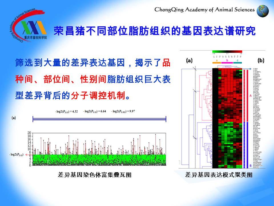 筛选到大量的差异表达基因,揭示了品 种间、部位间、性别间脂肪组织巨大表 型差异背后的分子调控机制。 差异基因染色体富集叠瓦图差异基因表达模式聚类图 荣昌猪不同部位脂肪组织的基因表达谱研究